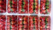 提高食品封口质量 真空封口机维护保养工作切莫忘